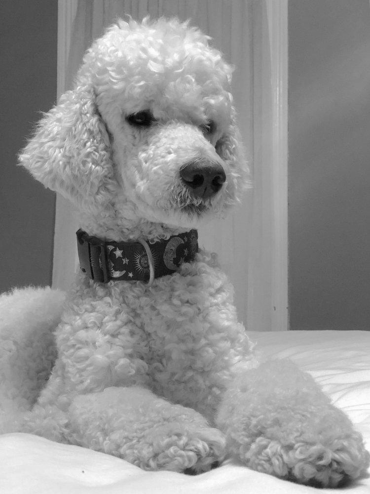 Fulton's Professional Dog Grooming: 511 Old Lancaster Rd, Berwyn, PA
