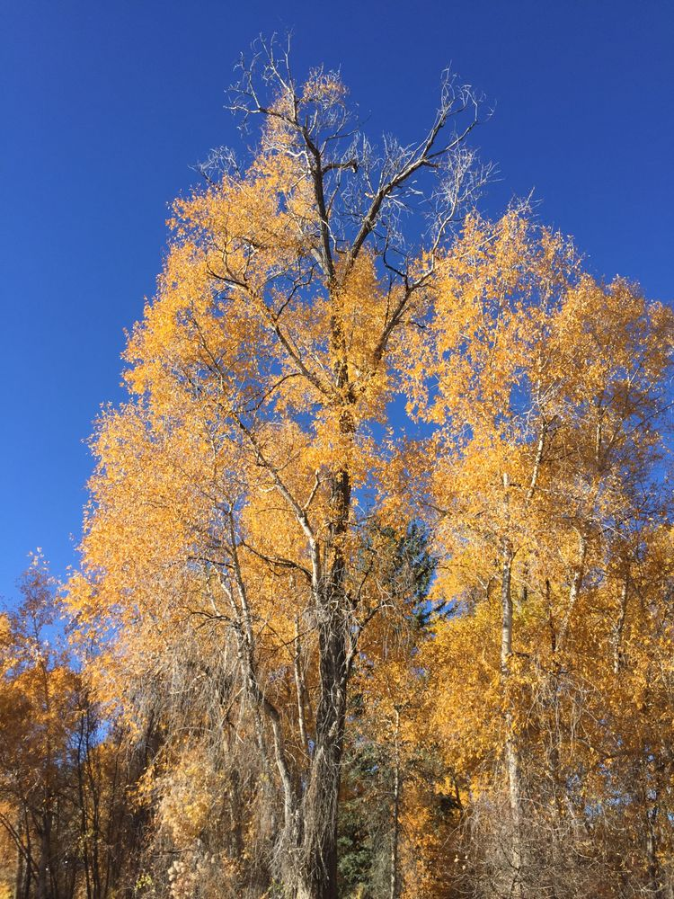 Cutting Edge Tree Worx: Bayfield, CO