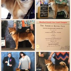 Showboat Kennels 66 Photos Pet Breeders 629 N Delray Rd