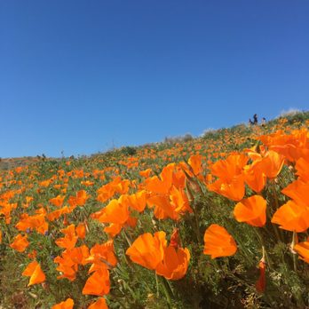 Antelope Valley California Poppy Reserve - (New) 1727 Photos