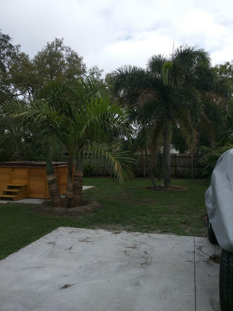 Discount Palms and Plants: 9009 Seminole Blvd, Seminole, FL