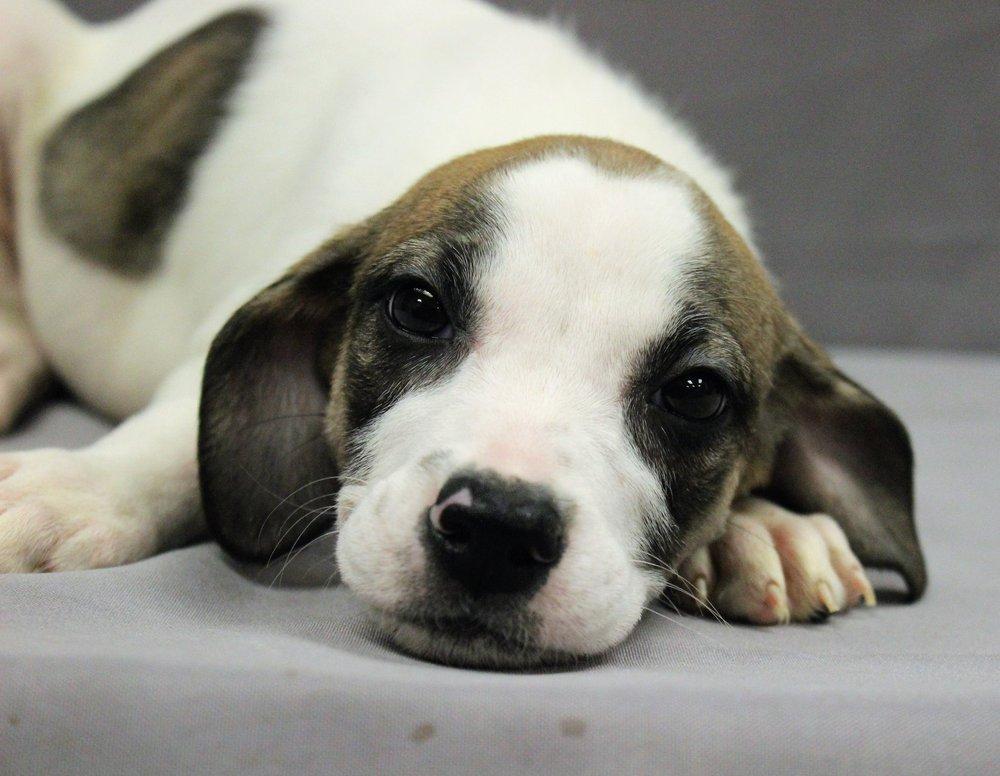 Tri-County Animal Shelter: 6707 Animal Shelter Rd, Hughesville, MD