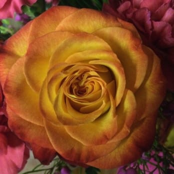 Photo Of Rose Garden Florist   Paducah, KY, United States. Gorgeous Roses Amazing Pictures