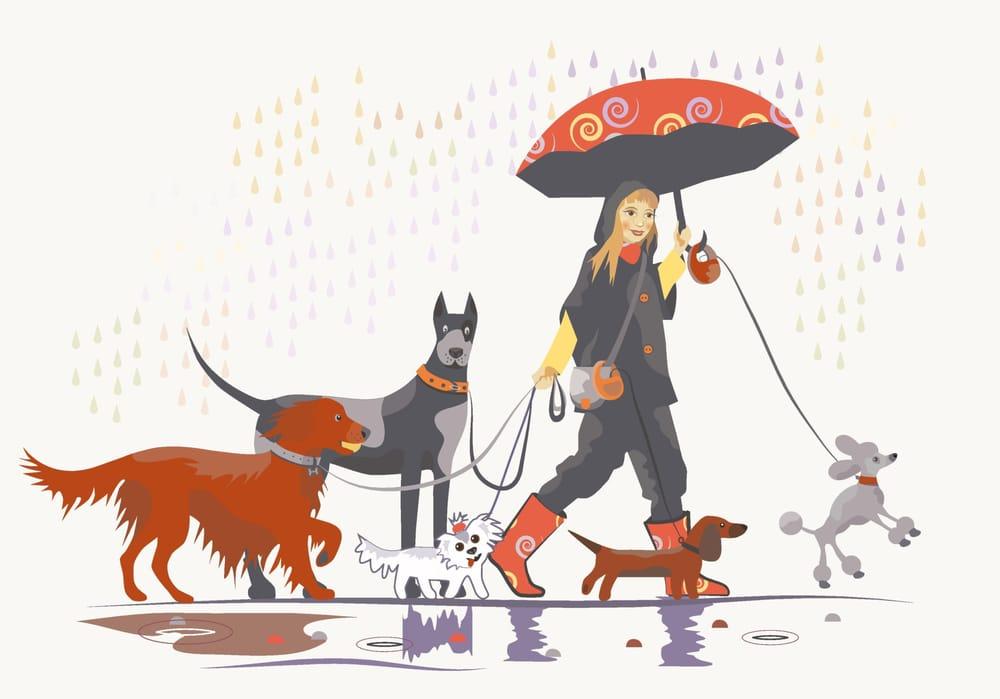 Rain City Paws: Seattle, WA