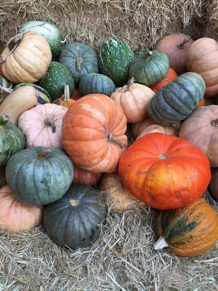 Piedmont Avenue Pumpkin Patch
