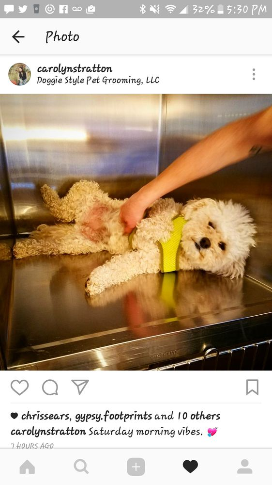 Doggie Style Pet Grooming: 275 Main St, Edwards, CO