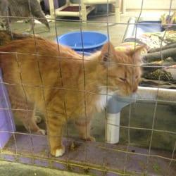 Lake Country Spca - Animal Shelters - Clarksville, VA - Phone ...