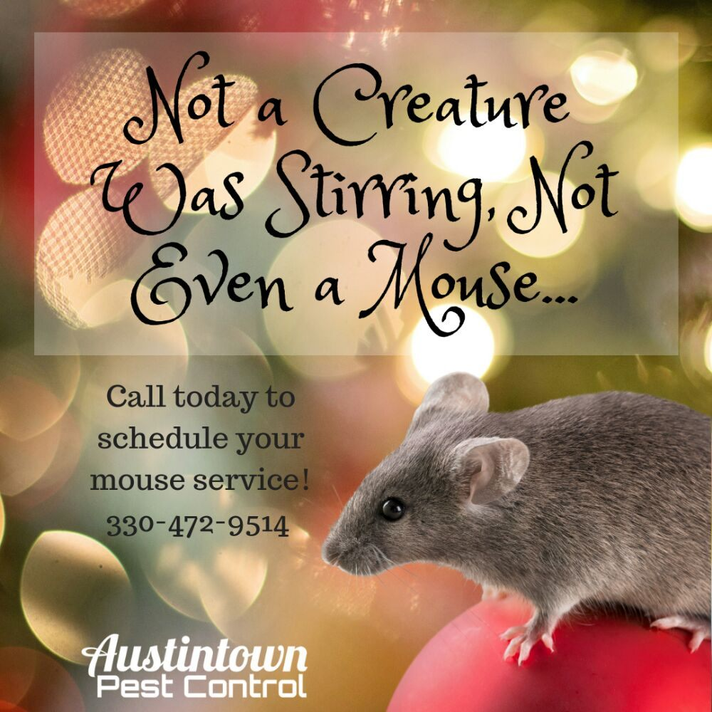 Austintown Pest Control: Youngstown, OH