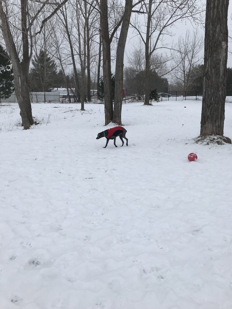 Ridge Run Dog Park: 234 Ridge St, Boyne City, MI