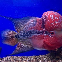 Photos for Mark's Tropical Fish - Yelp