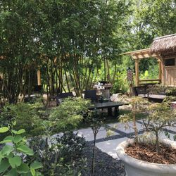 Photo Of Houston Bamboo Nursery Tx United States Awesome