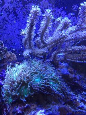 Sublime Aquarium Care