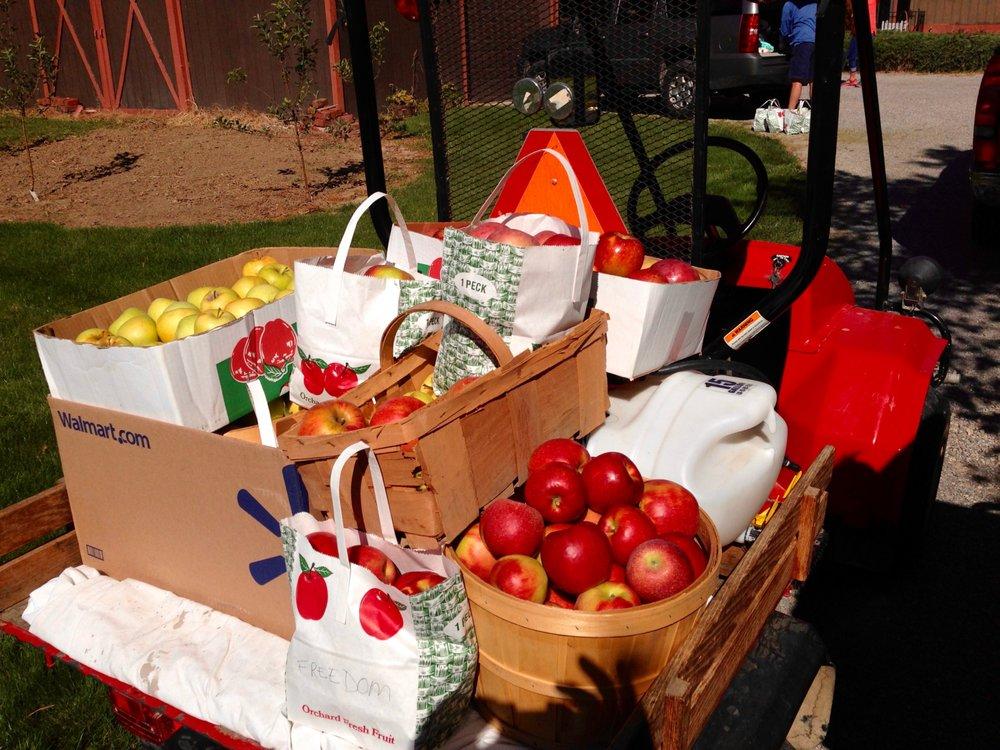 Sugar Creek Orchard: 5395 Sugar Creek Rd, Beaverdam, OH