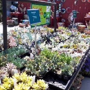 Photo Of Armstrong Garden Centers Dublin Ca United States Succulents