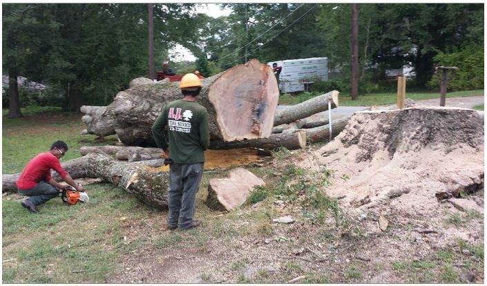 Aj Tree Service: 4371 Veterans Memorial Hwy, Lithia Springs, GA