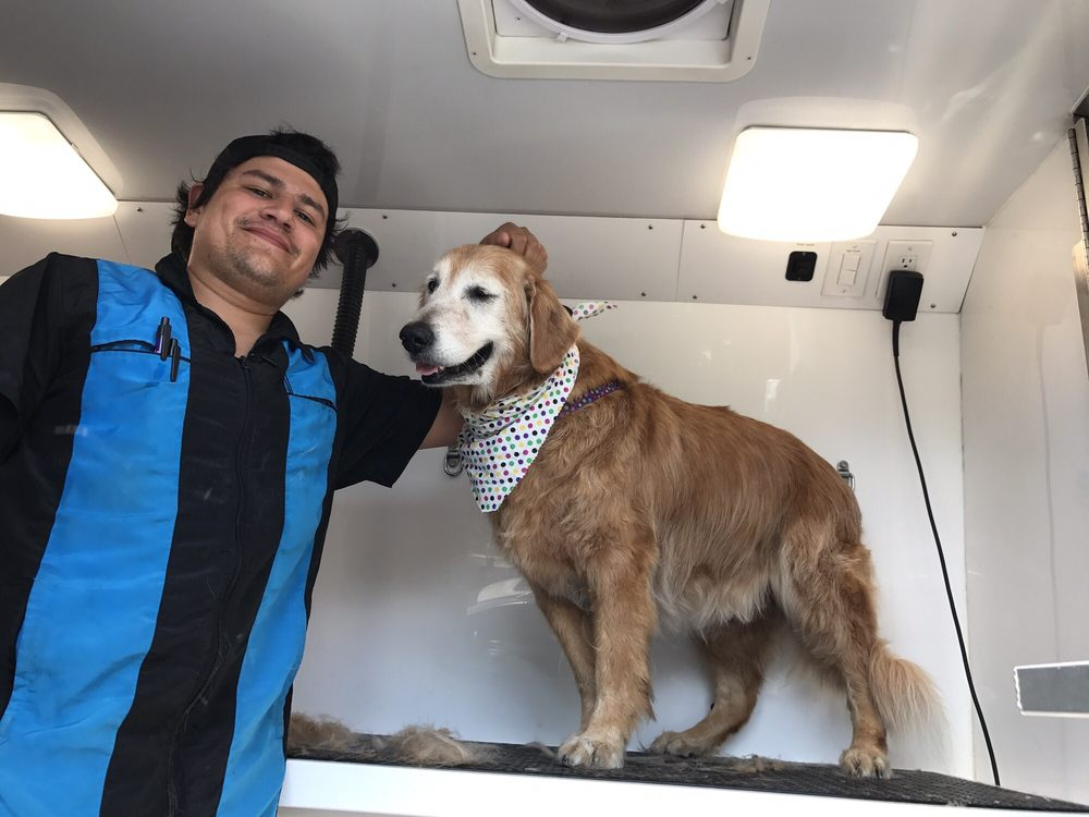 Lucky Dawg Mobile Grooming