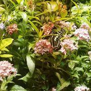 ... Photo Of The Smithsonian Butterfly Habitat Garden   Washington, DC,  United States ...