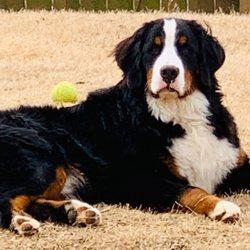 Premier Doodles - Request a Quote - Pet Breeders