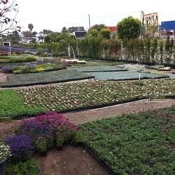 Photo Of Ramirez Nursery Gardena Ca United States