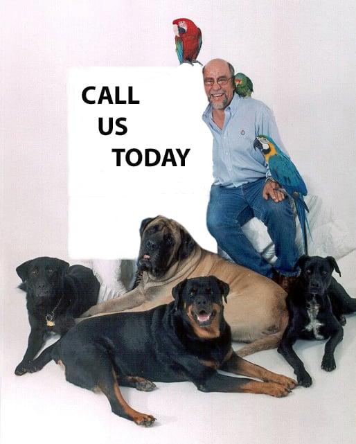 Dog Training by Bob Maida: Yonkers, NY