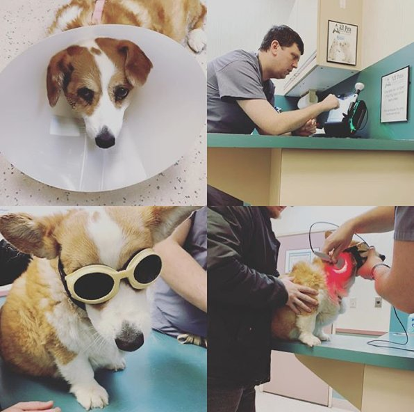 All Pets Veterinary Clinic: 200 W Sweet Ave, Bismarck, ND