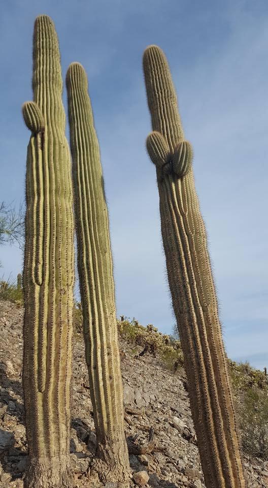 Casa Grande Mountain Park: West Arica Rd, Casa Grande, AZ