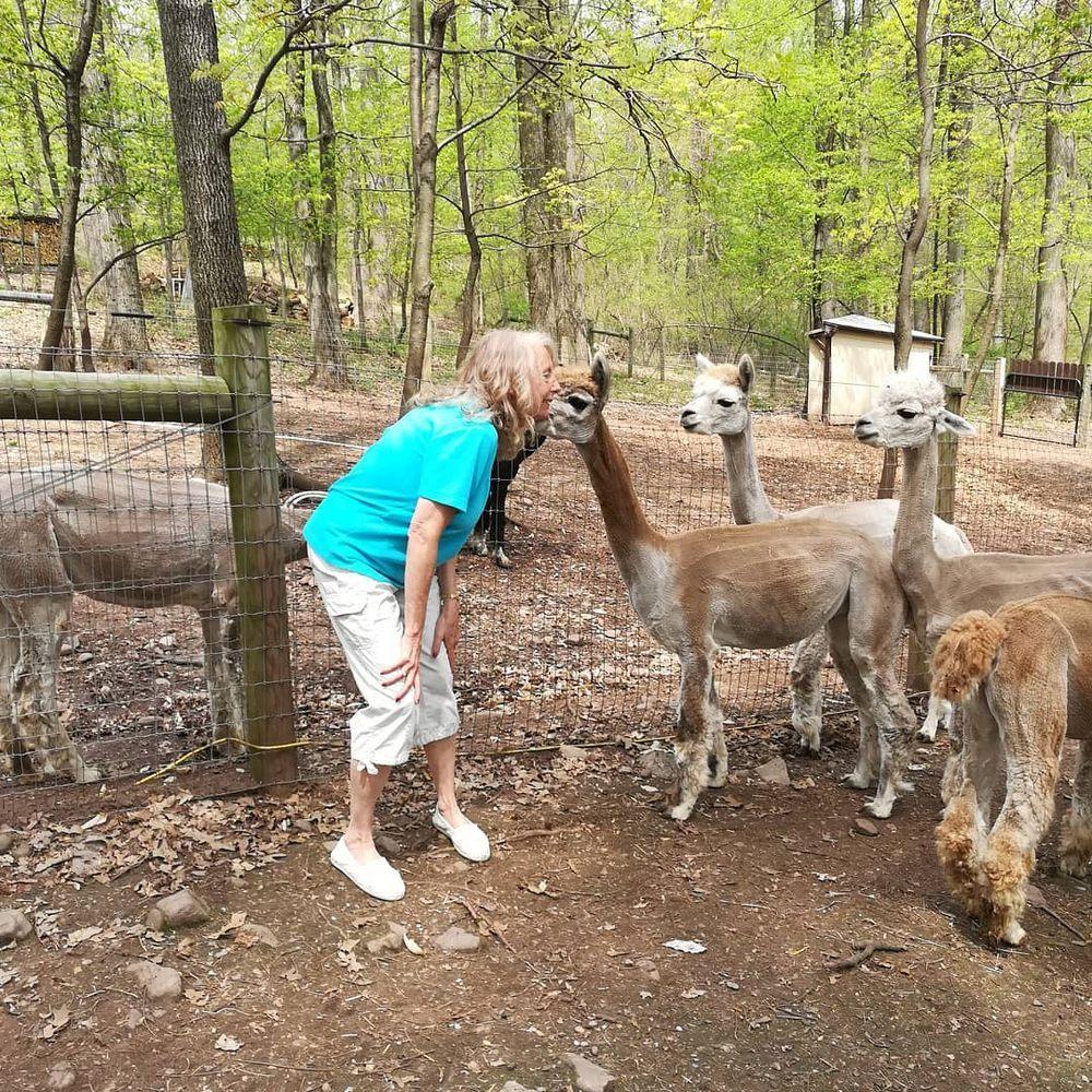 Positively Alpaca Farm: 436 Maple Grove Rd, Mohnton, PA
