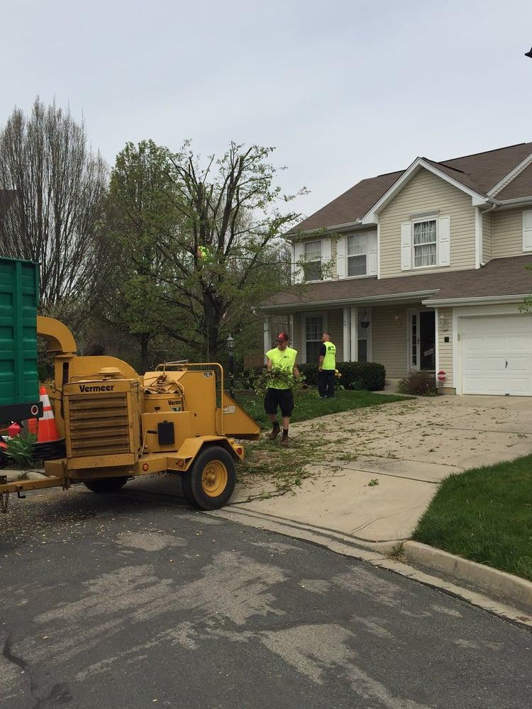 MRB Tree Service: Beavercreek, OH