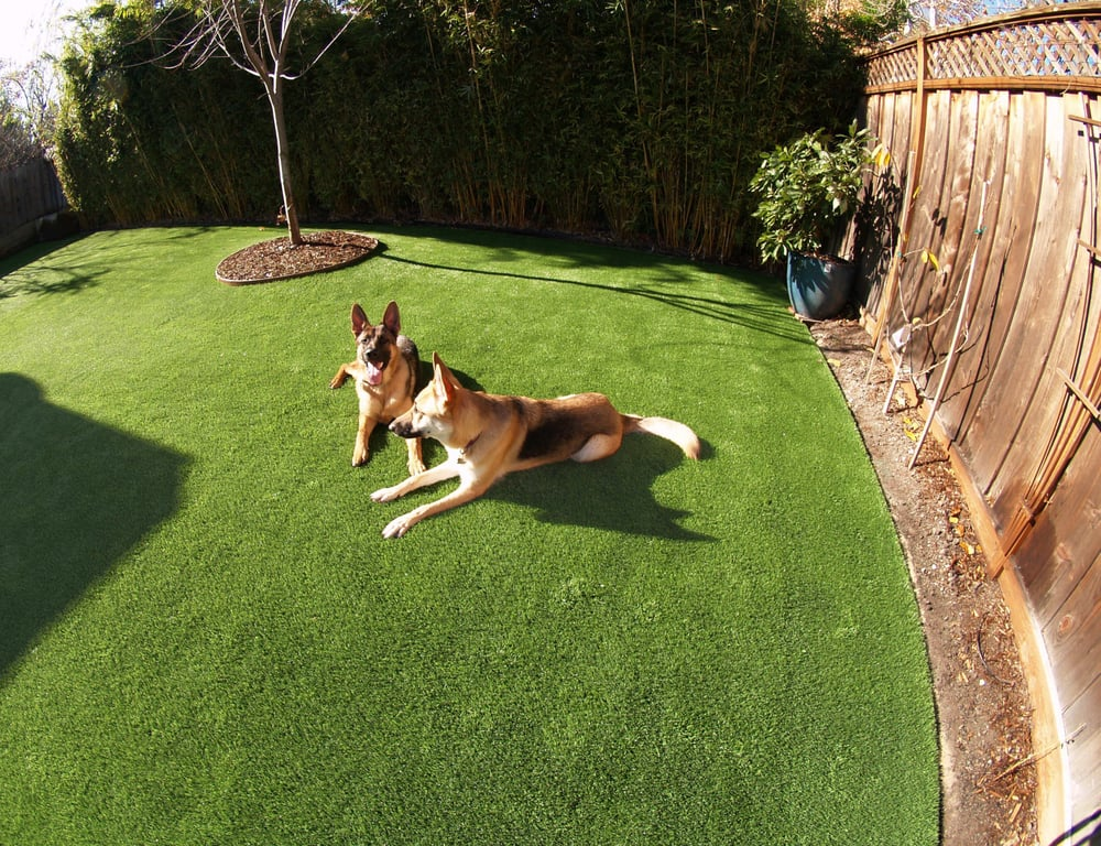 Artificial Grass Installed For A Dog Run Area In A