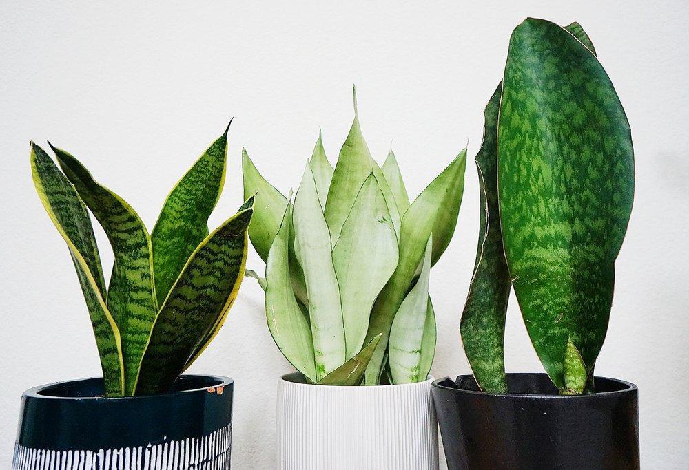Tall Plants: 9191 Katy Fwy, Houston, TX