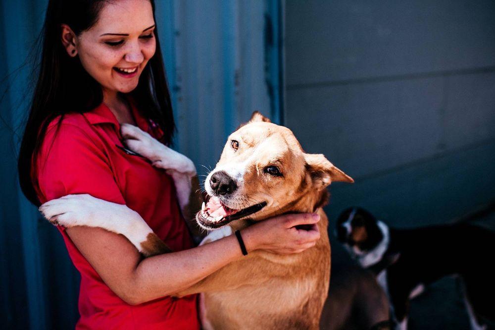 Pittsburgh Pet Concierge: 227 Loretta Dr, Monroeville, PA