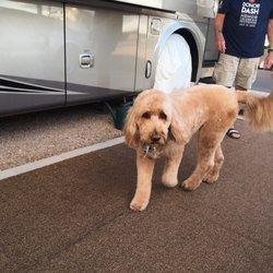 Apache tails pet salon 13 photos 17 reviews pet groomers photo of apache tails pet salon apache junction az united states solutioingenieria Image collections