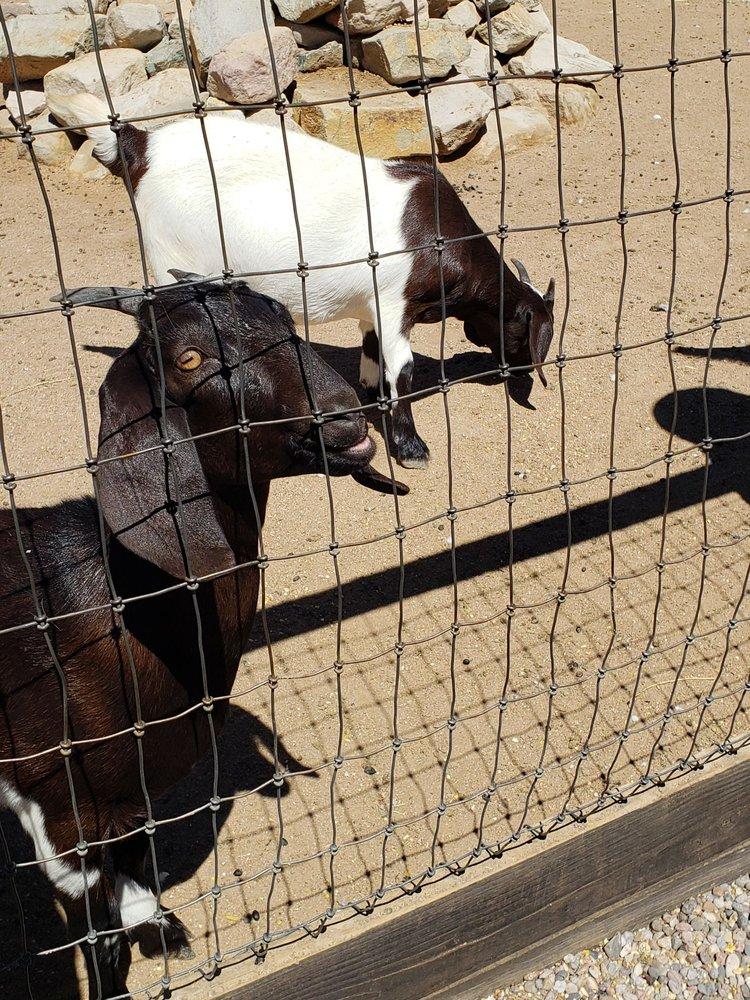 Casa Grande Trading Post & Petting Zoo: 17 Waldo St, Cerrillos, NM