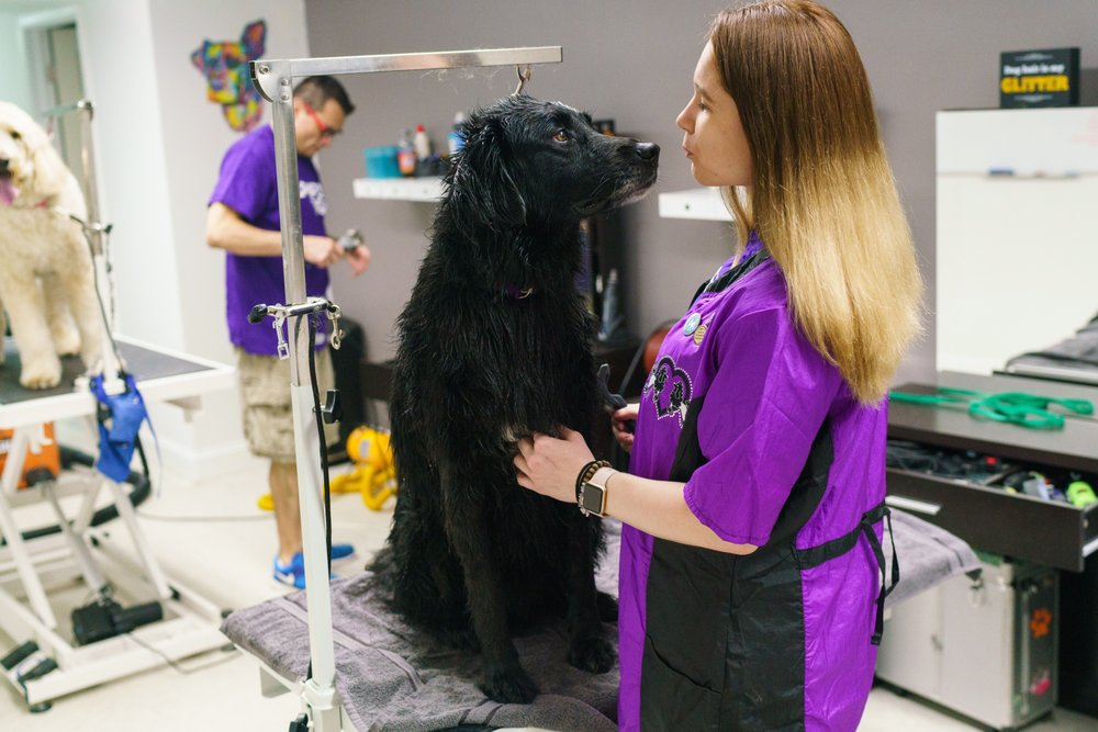 Playful Paws Grooming Salon & Daycare
