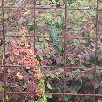 Photo Of Harlow Gardens   Tucson, AZ, United States. Hummingbird In The  Gardens