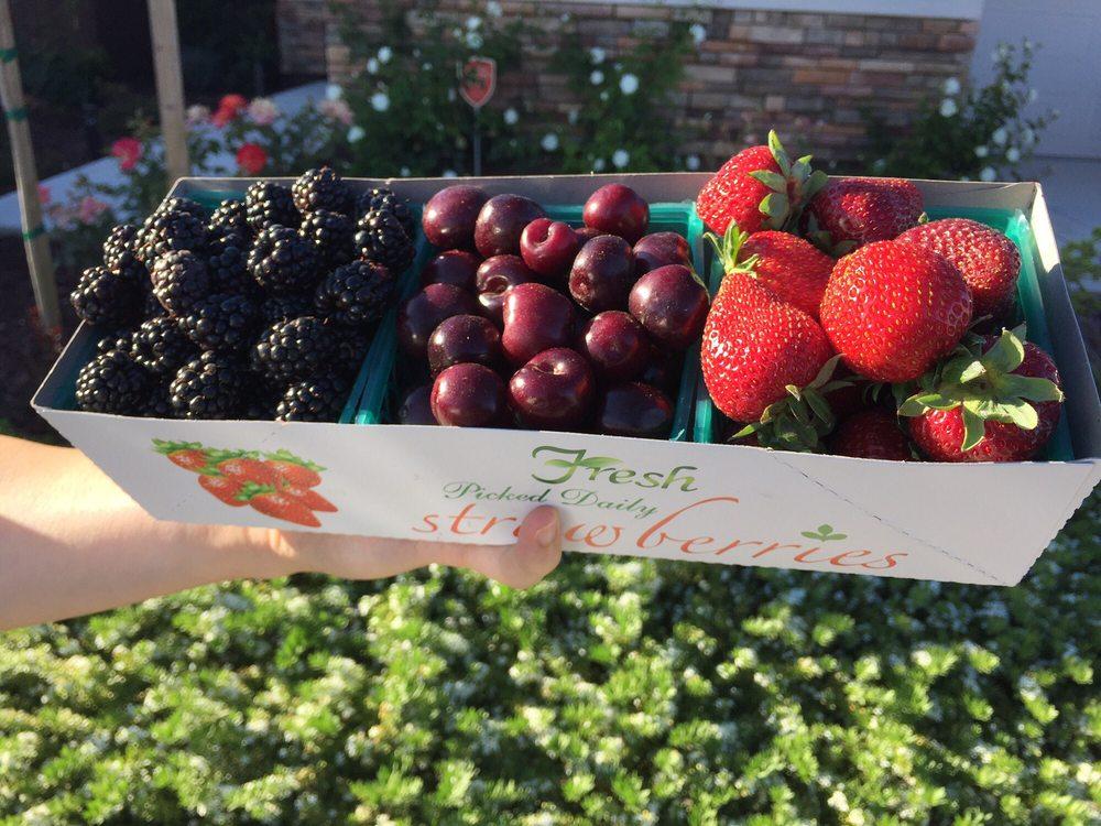 Strawberry Stand: Elk Grove-Florin Road And McCoy Rd, Sacramento, CA