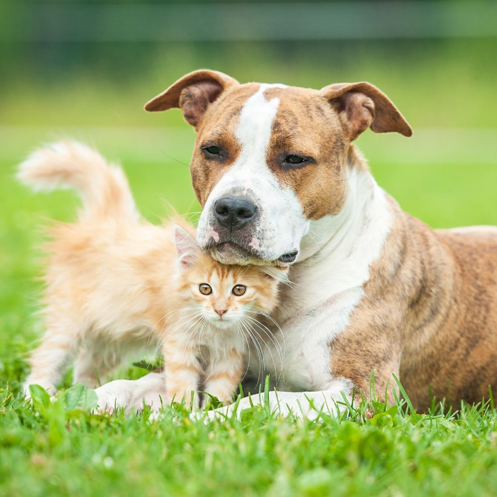VIP Petcare Wellness Center: 609 San Ramon Valley Blvd, Danville, CA