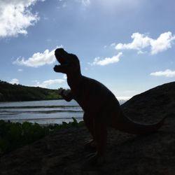 8df238913c Roberts Hawaii Tours - 10 Photos   24 Reviews - Tours - 3-4567 Kuhio ...