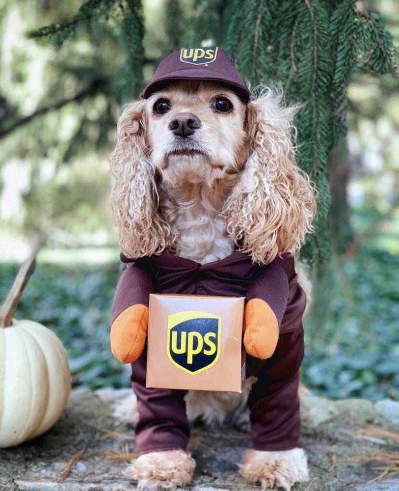 The UPS Store: 102 Hartman Dr, Lebanon, TN