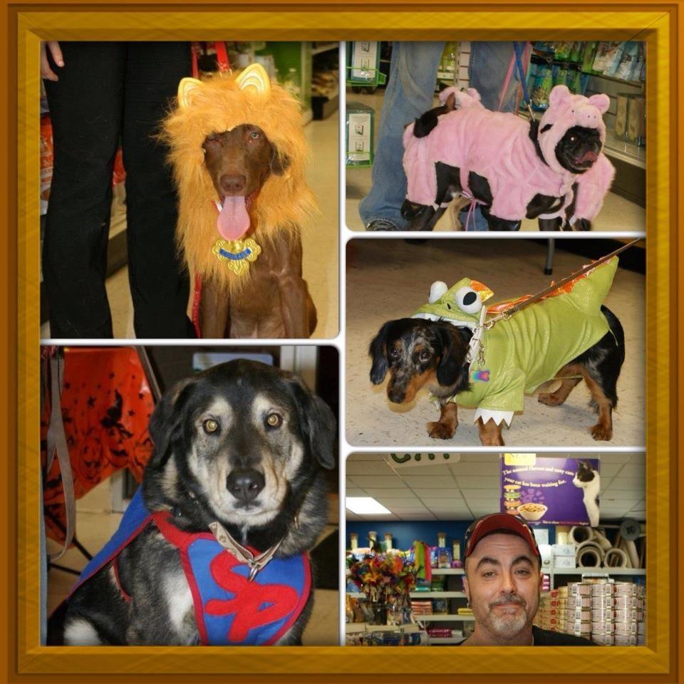Healthy Pet Center: 154 Delaware Ave, Delmar, NY