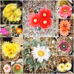 Photo Of Cactus Mart Fillmore Ca United States