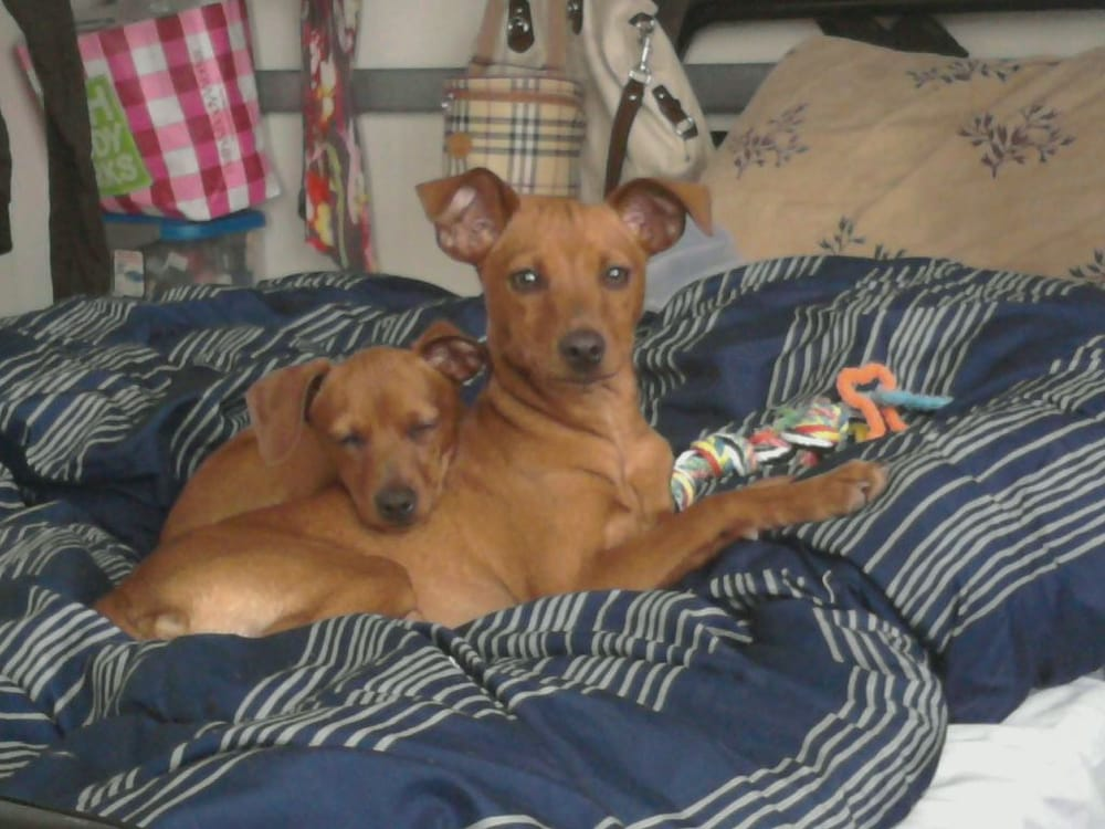 my boys 2 days after adoption   yelp