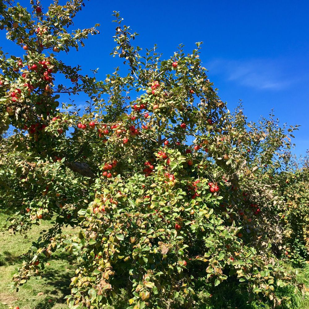 Green Mountain Orchards: 130 W Hill Rd, Putney, VT
