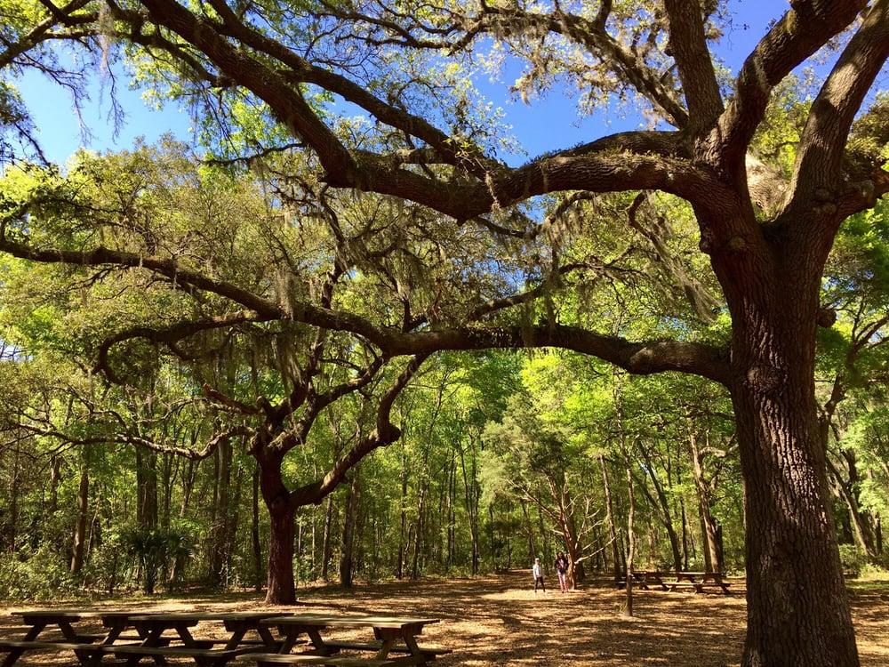 Live oaks that the living love yelp - Jacksonville arboretum and gardens ...