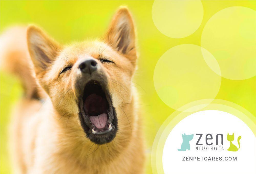 Zen Pet Care Services - Dog Fitness Experts + Professional Pet Sitters