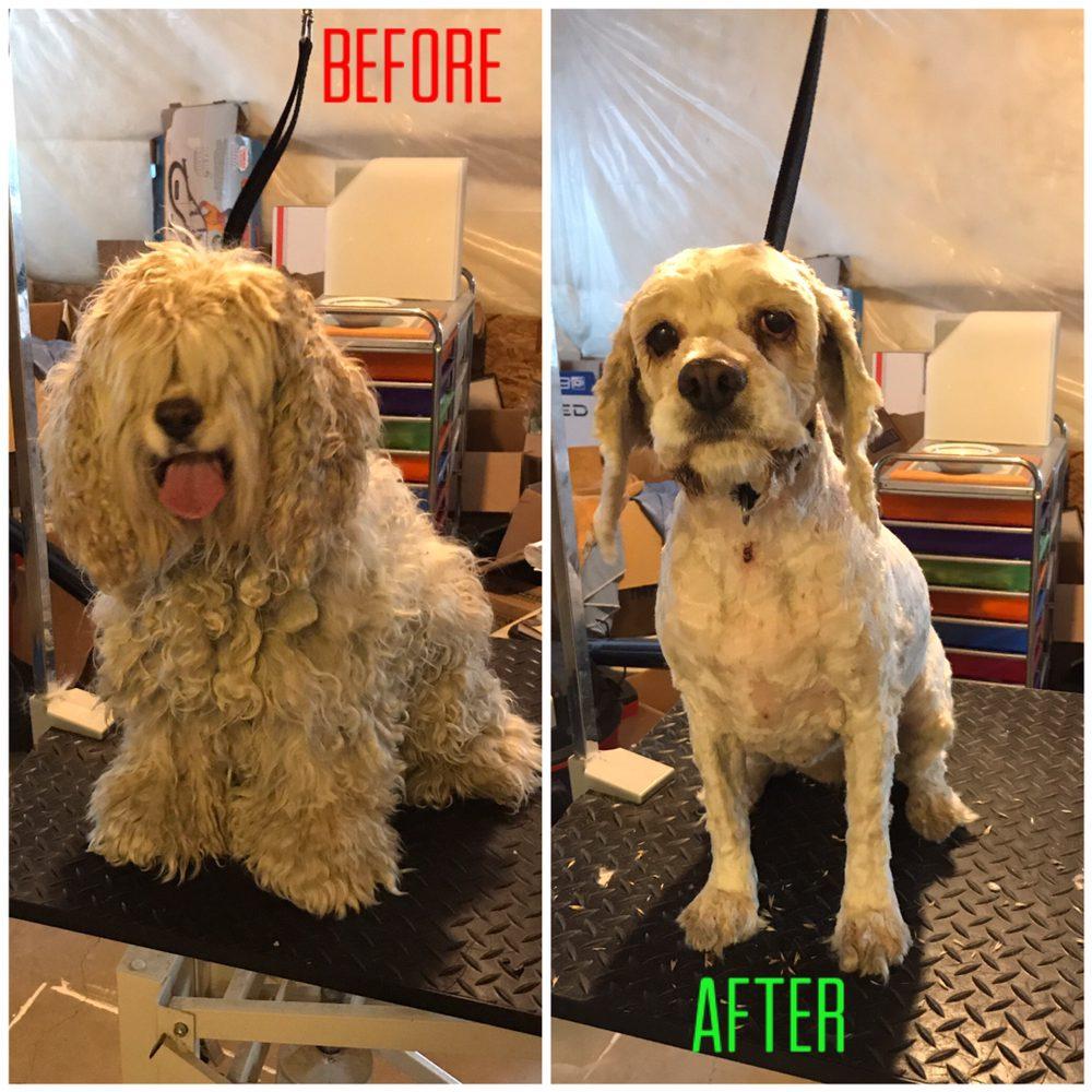 Top Paws Pet Salon: 2338 E Hitching Post Dr, Eagle Mountain, UT