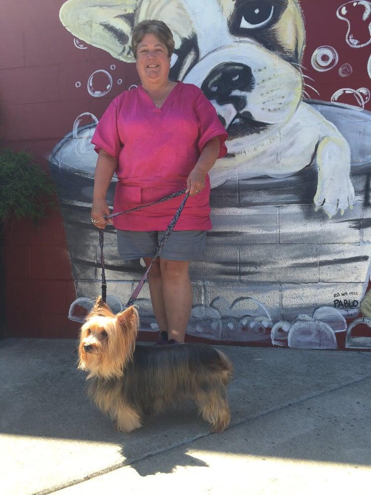 Yelp Dog Grooming Portland