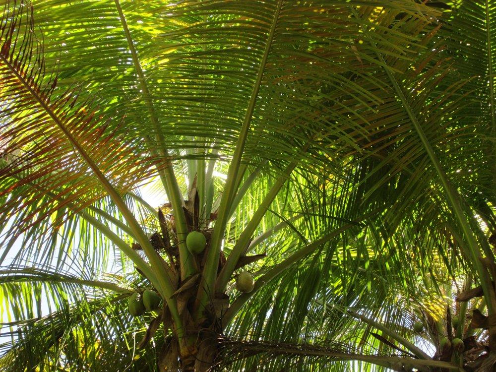 Humacao Nature Reserve: Route 3, Bayamón, PR