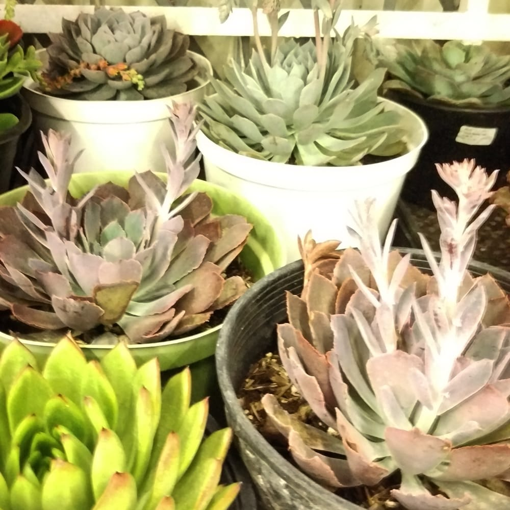 Best Succulent Variety For Best Prices Yelp