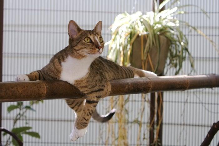 Pet Camp Cat Safari San Francisco Ca